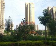 鼎秀華城實景圖