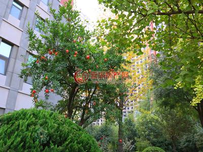 白水街可貸款大三居,緊鄰公園